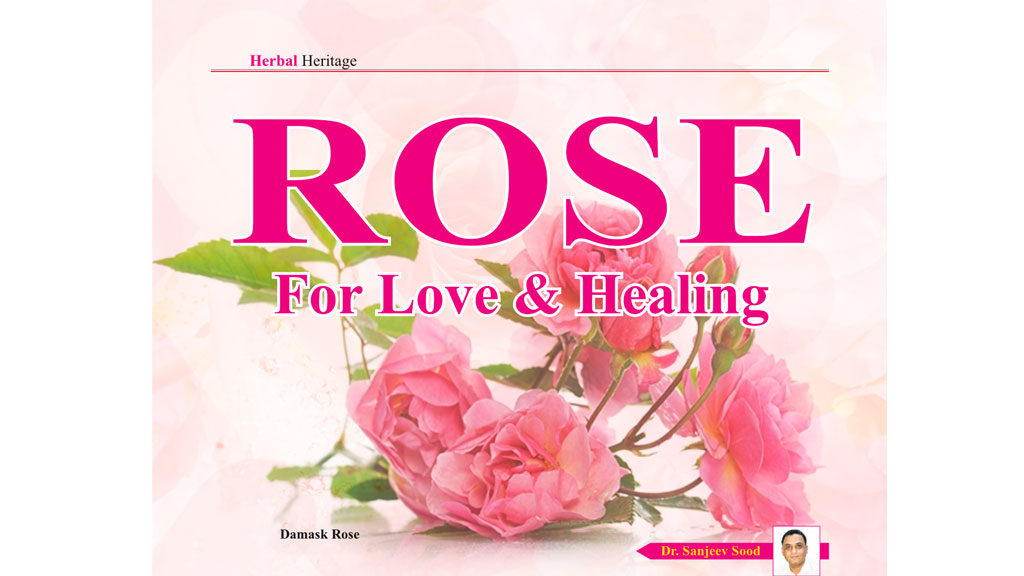Rose for Love and Healing